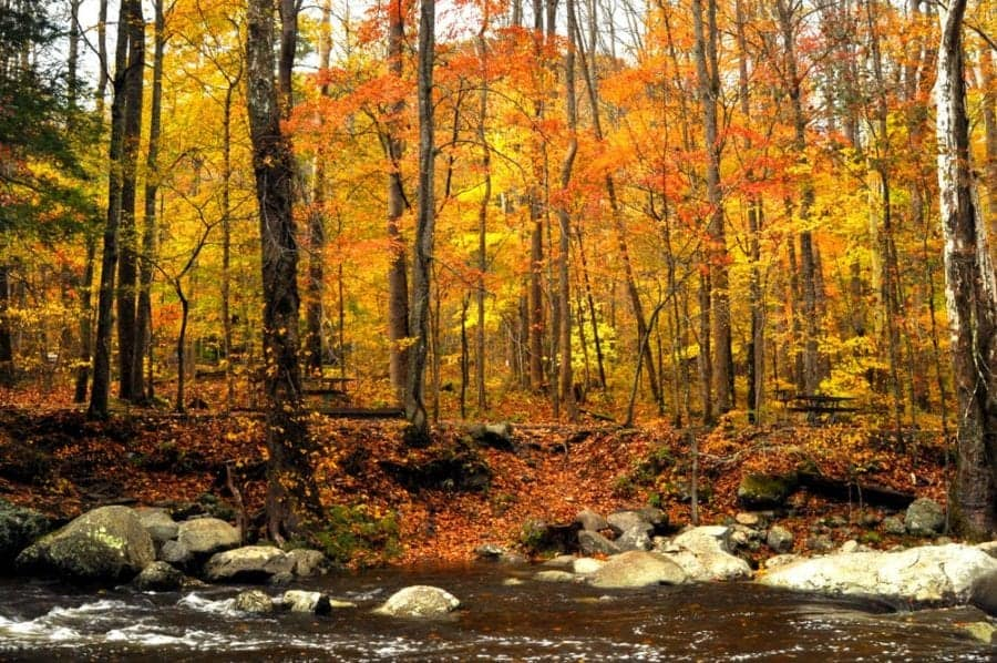 Vibrant fall leaves next to a stream in the Smoky Mountains.