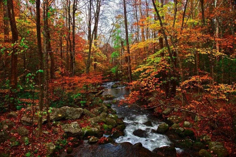 Creek near Great Smoky Mountains during fall